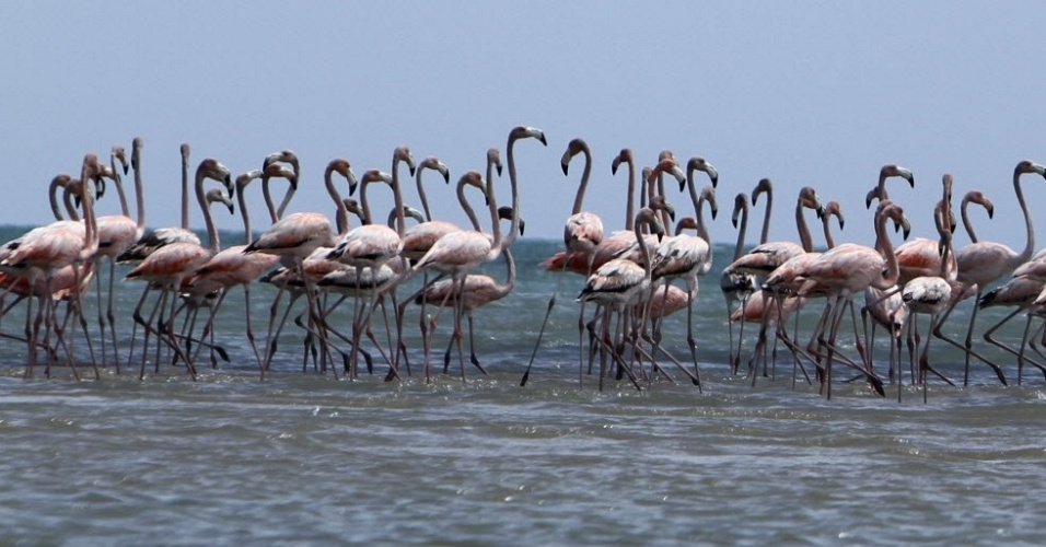 19.jun.2012 - Vale de flamingos pr&#243;ximo &#224; cidade de Manaure, na prov&#237;ncia de Guajira (Col&#244;mbia)