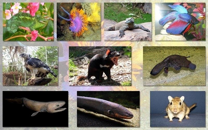 A julgar por certos animais, como o diabo da Tasmânia, o dragão de Komodo, a hárpia e o poraquê, fica a impressão de que, às vezes, a Natureza gosta de ser sobrenatural. São bichos extraordinários, que apresentam características muito particulares. Vamos fazer um curioso safári pelo mundo dos animais exóticos?