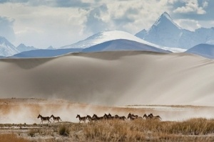 27.jun.2012 - Grupo de burros corre na regi&#227;o de Paryang, no Tibet
