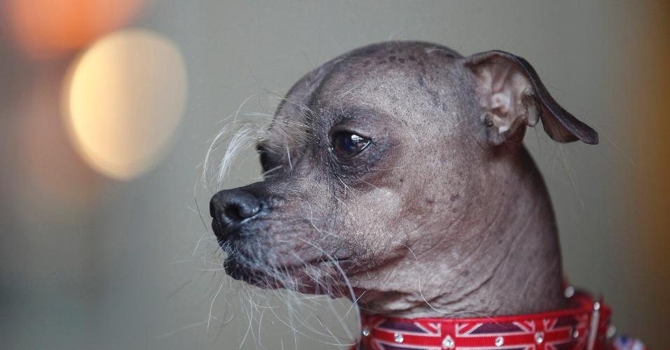 22.jun.2012 - Mugly faz sua melhor pose durante concurso do cão mais feio do mundo, disputado na Califórnia em 22 de junho