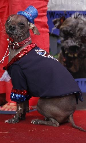 22.jun.2012 - Mugly posa de chapéu azul e roupinha durante disputa do título de cão mais feio do mundo, na Califórnia em 22 de junho