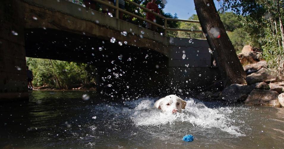 30.jun.2012 - Labrador brinca na água em Salt Lake City, Utah, Estados Unidos, onde a temperatura chega se aproxima dos 40ºC