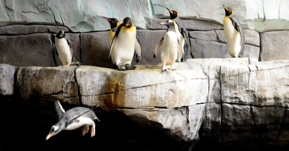 5.jul.2012 - Pinguins em &#225;rea rec&#233;m-inaugurada de zoo de Hamburgo, na Alemanha