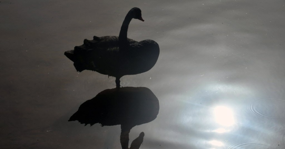 11.jul.2012- Imagem de cisne &#233; refletida em lago de zool&#243;gico em Rabat, Marrocos