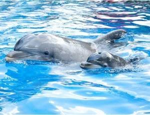 Esse � o mais novo filhote do parque SeaWorld