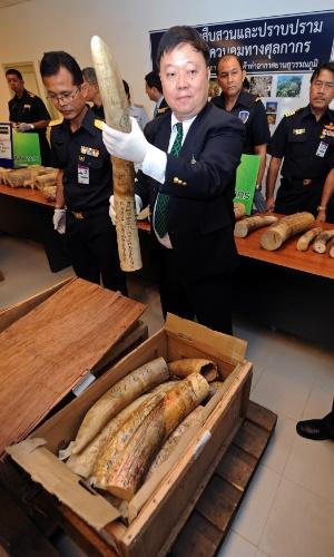17.jul.2012 - Funcionário do governo tailandês mostra marfim de elefantes apreendido no aeroporto de Bancoc, nesta terça-feira (17). Os 456 kg de presas de marfim apreendidos vinham do Quênia e tinham valor de mercado de US$ 422 mil (R$ 844 mil)