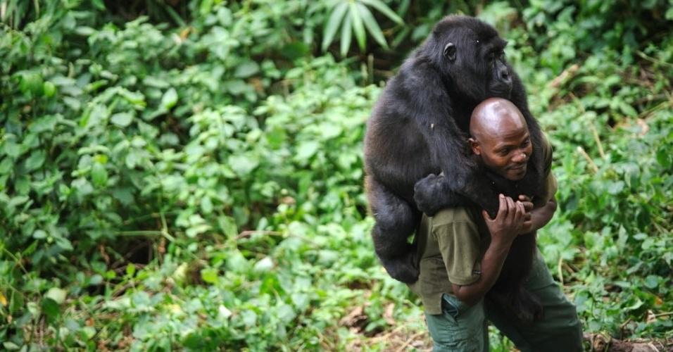 17.jul.2012 - Guarda do Parque Nacional de Virunga, no leste da República Democrática do Congo, carrega um gorila órfão no ombro. O local é o lar de aproximadamente um quarto da população de gorilas da montanha do mundo