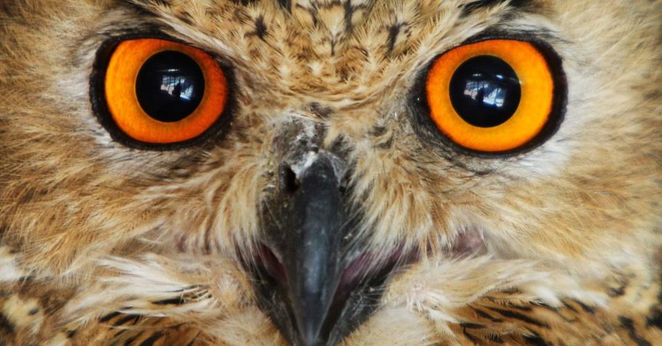 26.jul.2012 - Coruja observa ambiente nesta quinta-feira (26) em zoológico da Jordânia, próximo a Amã