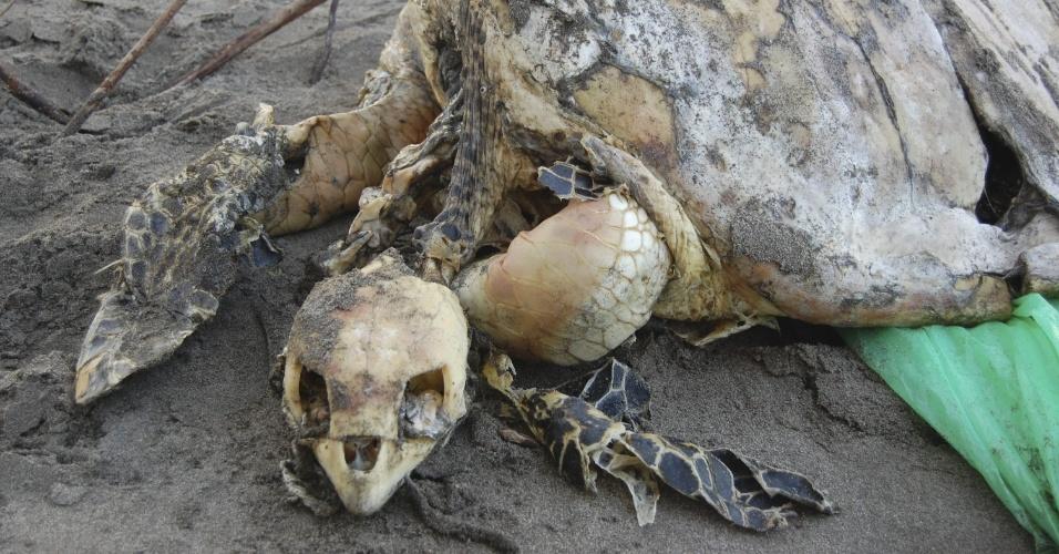 26.jul.2012 - Fotografia mostra uma carcaça de tartarugas encontrada na baía de Jiquilisco, em El Savador, na última quarta-feira (25)