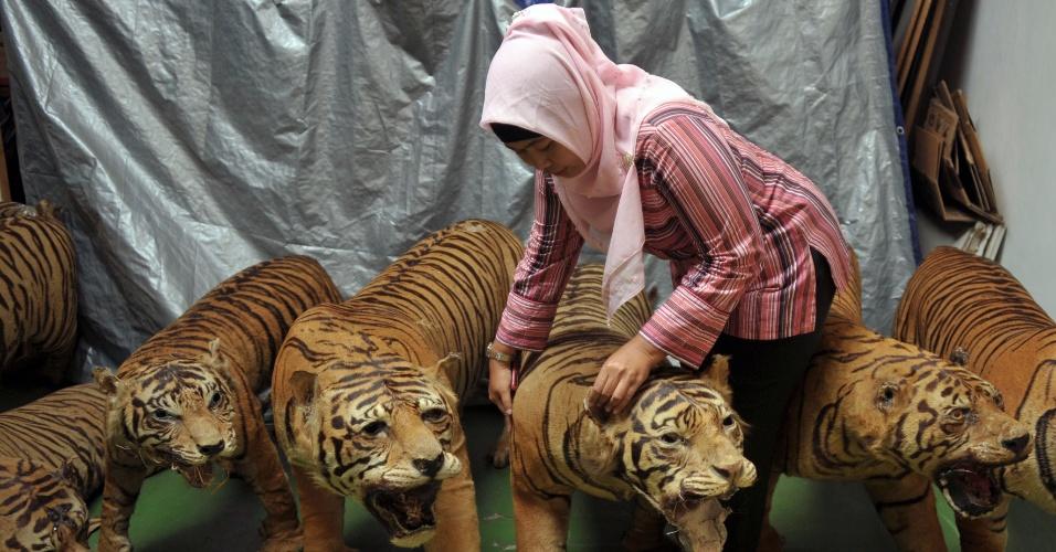 26.jul.2012 - Imagem divulgada nesta quinta-feira (26) mostra funcionária da polícia inspecionando 14 corpos preservados de tigres de Sumatra em Cibubur, ao sul da capital indonésia, Jacarta