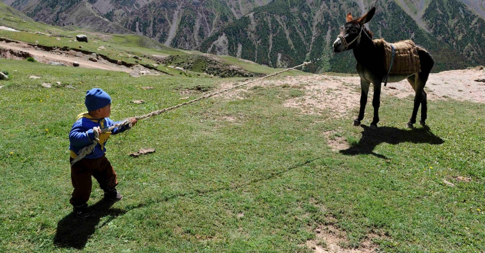 29.jul.2012 - Garoto se esfor&#231;a para puxar burro perto do Monte Tianshan, em Aksu, prov&#237;ncia de Xinjiang (China)