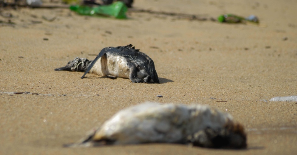 30.jul.2012 - Pinguins foram encontrados mortos na Praia de Pa&#250;ba, em S&#227;o Sebasti&#227;o (SP), na manh&#227; deste domingo (29)