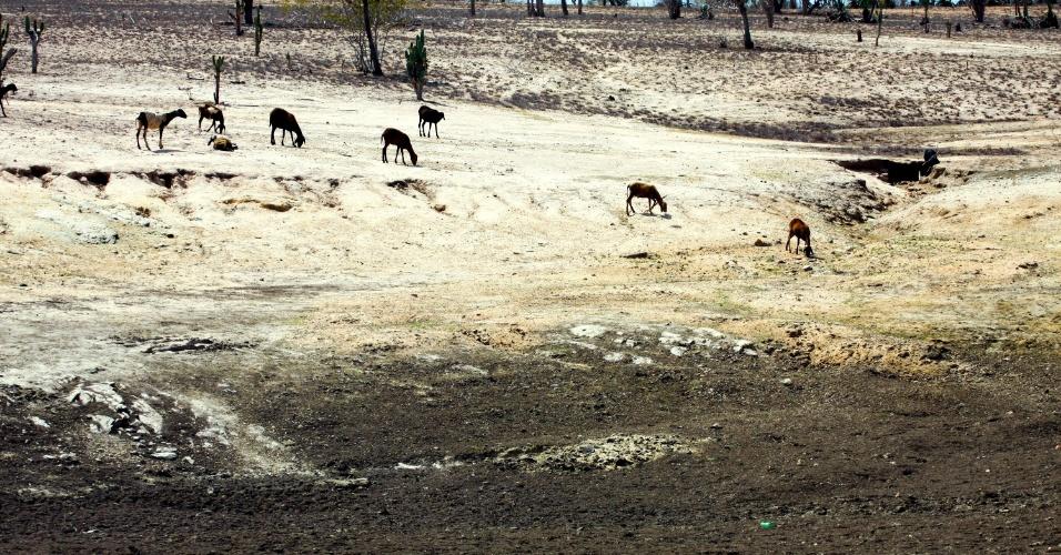 1°. ago.2012 - Seca atinge a região de Santa Luz ( 258 km de Salvador), centro oeste baiano, entre os municipios de Queimadas e Serrinha