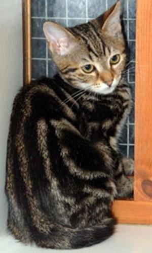 Cats Protection Dartford