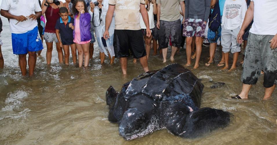6.ago.2012 - Uma tartaruga de 320 quilos e dois metros de comprimento, procedente de Trinidad e Tobago, no Caribe, foi encontrada nesta segunda (6), na França, em uma praia do Mar Mediterrâneo. A tartaruga estava levemente ferida quando foi achada e logo depois foi devolvida ao mar
