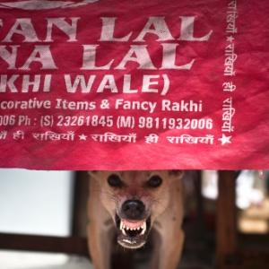 Cão de rua rosna debaixo de mesa de restaurante em Nova Déli, Índia