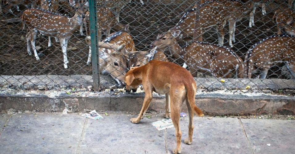 7.ago.2012 - Cão de rua tenta comer ração de veados em Nova Déli, Índia