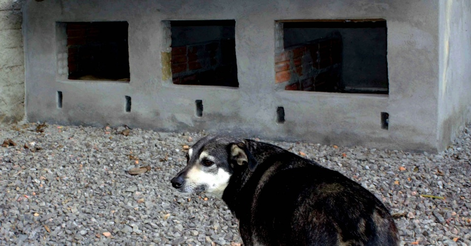 Cão adotado por funcionários do Detran-RS ganha casa de alvenaria na sede do órgão