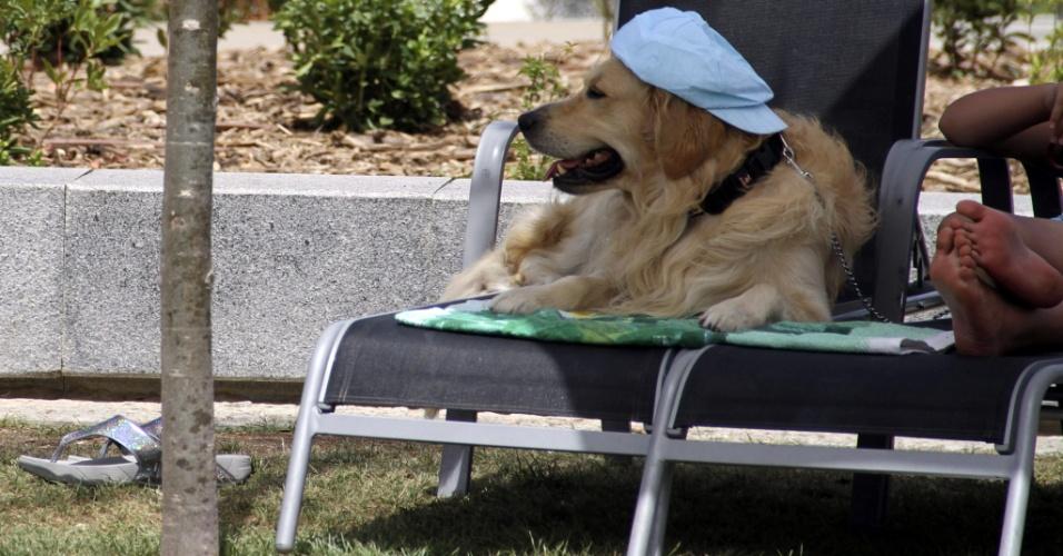 9.ago.2012 - Cachorro descansa em sombra em mais um dia de calor em Madri, na Espanha