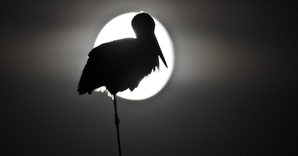 4.ago.2012 - Cegonha pousa em frente à lua em Sieversdorf, na Alemanha