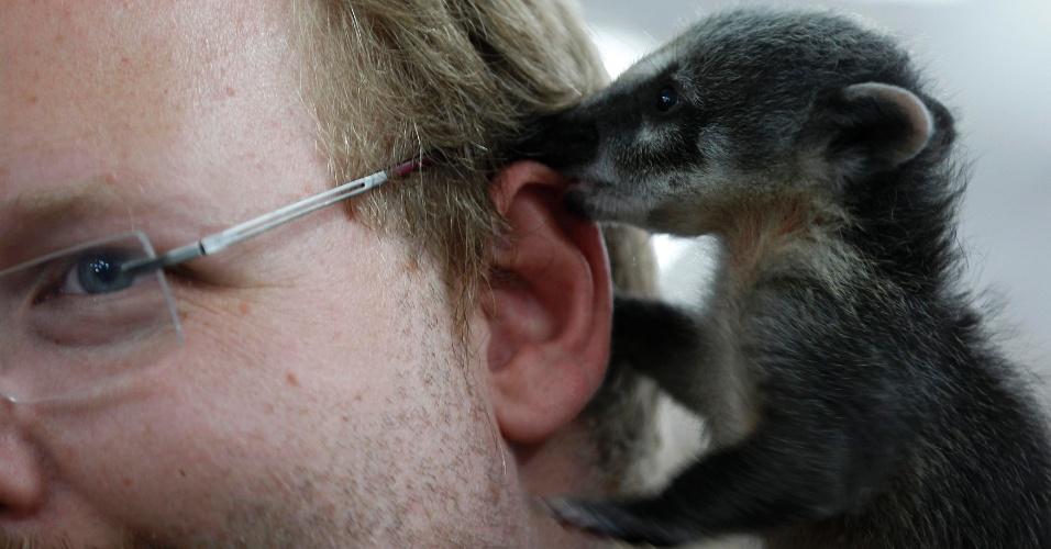 4.ago.2012 - Coati lambe a orelha de seu proprietário Christian Kobold em pet shop de Duisburg, na Alemanha
