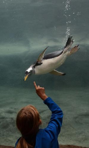 9.ago.2012 - Criança aponta para pinguim que mergulha no zoológico de Wuppertal, na Alemanha