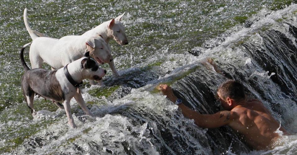 20.ago.2012 - Homem se refresca com seus cachorros no rio Berounka, na vila de Dobrichovice, próxima à Praga, capital da República Tcheca. As temperaturas no país devem ultrapassar 38°C nesta segunda-feira (20)