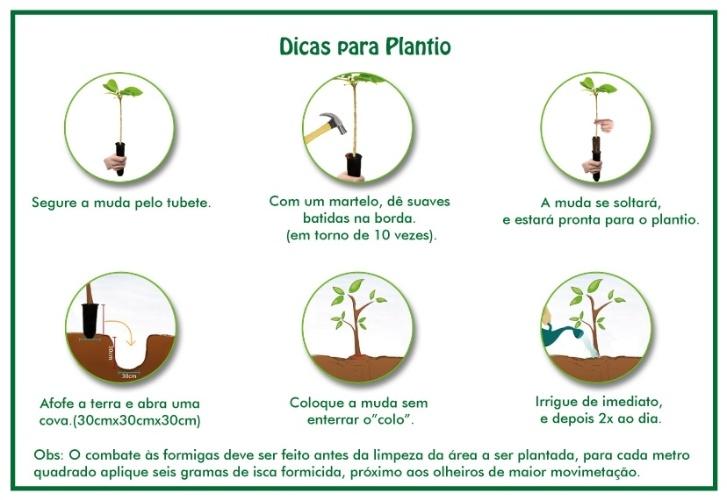 Fonte: Instituto Brasileiro de Florestas