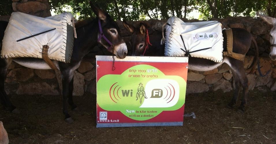 23.agosto.2012 - O parque israelense Kfar Kedem, na cidade de Israel, equipou cinco de seus jumentos com roteadores Wi-Fi para que os turistas possam acessar a internet enquanto passeiam de burro. A oferta pode parecer contraditória, pois o local tem a proposta de mostrar aos visitantes como era a vida no local há centenas de anos -- roupas típicas, passeios em jumentos e construções rústicas fazem parte do pacote. A imagem acima, cedida pelo parque ao UOL Tecnologia, mostra alguns dos burros que levam os roteadores