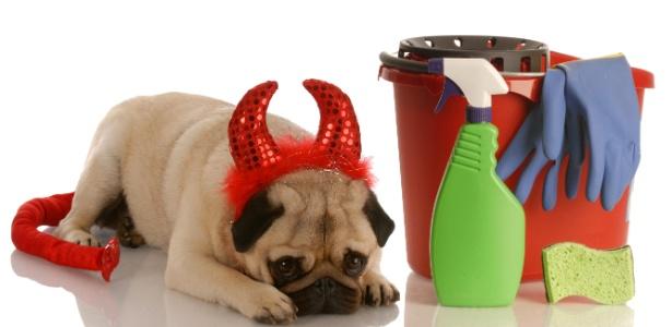 Educação e frequência de limpeza são aliados para manter a casa em ordem e sem cheiros desagradáveis