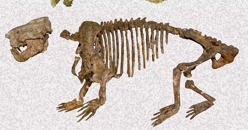 27.ago.2012 - Imagem traz comparativo entre os fósseis do Mongolim chinês (acima) e o do Ernanodon (abaixo). Arqueológos russos anunciaram nesta segunda-feira (27) que encontraram na Mongólia novo fóssil do Ernanodon, o primeiro mamífero a viver na Terra após a extinção dos dinossauros ? em 1979, ele já havia sido encontrado na União Soviética, mas o fóssil estava incompleto; a recente descoberta traz peças que faltavam do quebra-cabeça. A espécie de garras grandes viveu há cerca de 57 milhões e deu origem ao Mongolim, animal das zonas tropicais da Ásia e da África que se alimenta de insetos.