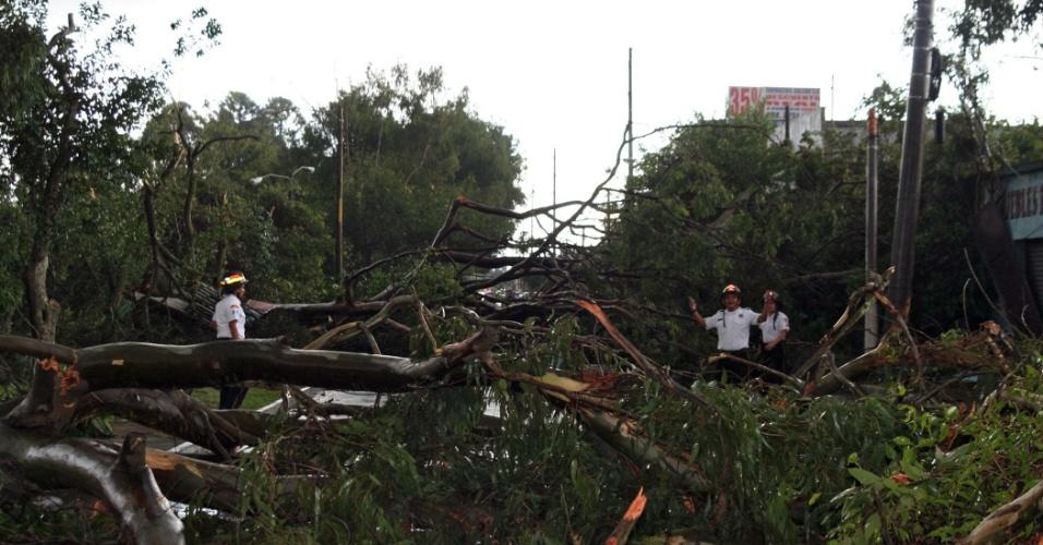 27.ago.2012 - Três árvores caem após fortes ventos atingirem a Cidade da Guatemala, neste domingo (26). Ao menos seis pessoas ficaram feridas e várias casas e carros foram danificados