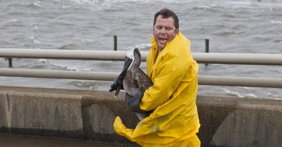 29.ago.2012 - Homem resgata pelicano marrom durante passagem do furacão Isaac por Nova Orleans (EUA) nesta quarta-feira (29). O animal, ameaçado de extinção, é símbolo do estado da Louisiana