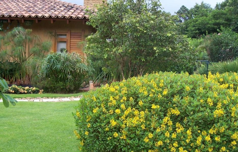 planta indicada para fromação de jardins com baixa necessidade de