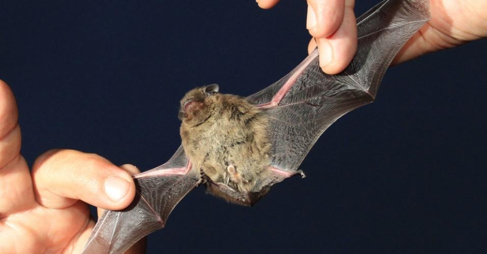 """2.set.2012 - Cientista mostra morcego durante evento educacional """"Night for Bats"""" (""""Noite dos Morcegos"""") em Mikulov, na República Tcheca"""