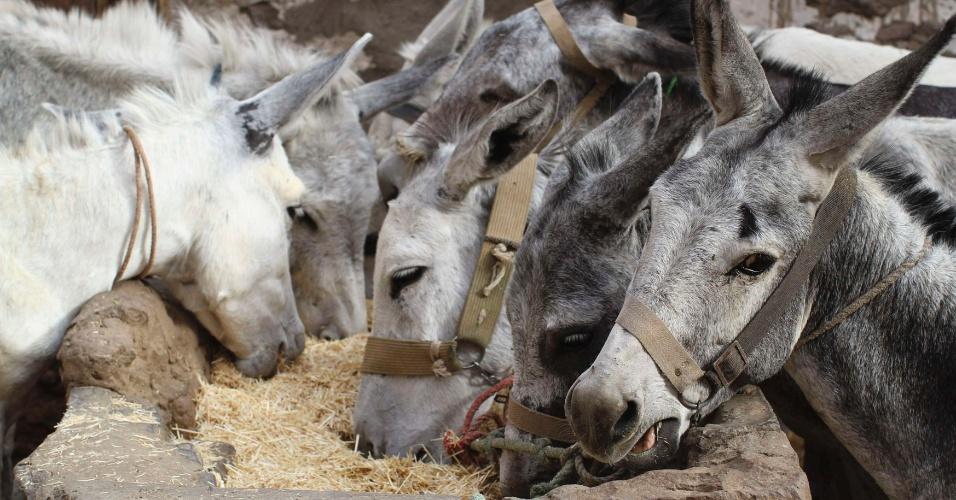 11.set.2012 - Burros postos à venda são alimentados no mercado de Souq al-Melh, em Sanaa, no Iêmen