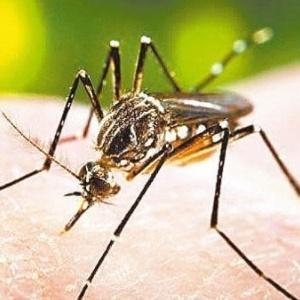 Cientistas concluíram que, ainda que inicialmente repelidos pelo composto químico do repelente, os insetos depois o ignoraram