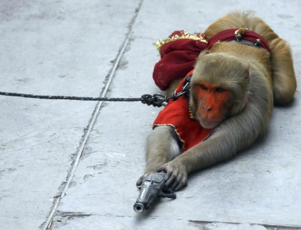 12.set.2012 - Macaco participa de show de rua nesta quarta-feira (12), na cidade indiana de Amritsar. Apesar de proibição, performances como esta continuam sendo realizadas nas ruas da Índia