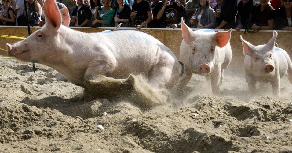 16.set.2012 - Porcos participam de corrida durante uma feira em Lausanne, na Suíça