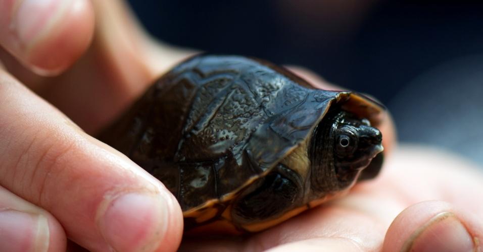 18.set.2012 - Tartaruga marinha é apresentada em zoológico na Alemanha