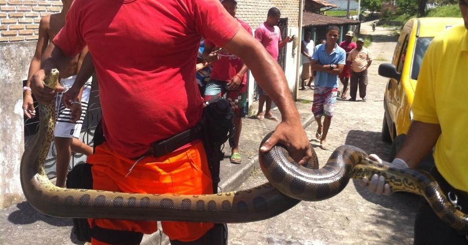 18.set.2012 - Uma sucuri de pouco mais de 3 metros de comprimento foi encontrada em uma casa no município de Lauro de Freitas (BA). Os moradores ficaram assustados e chamaram os bombeiros, que realizaram a captura do animal