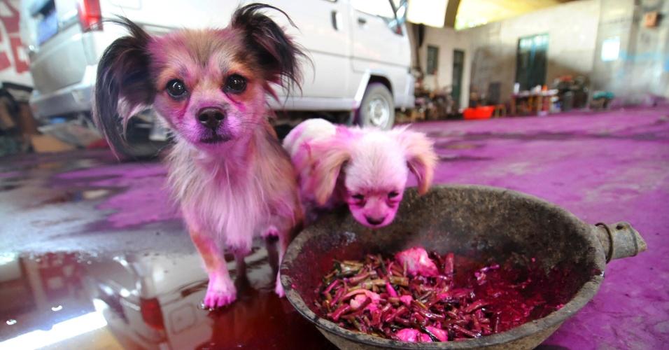 19.set.2012 - Cães que foram tingidos de rosa em contato com um composto orgânico usado como corante são vistos em Jinan, província de Shandong