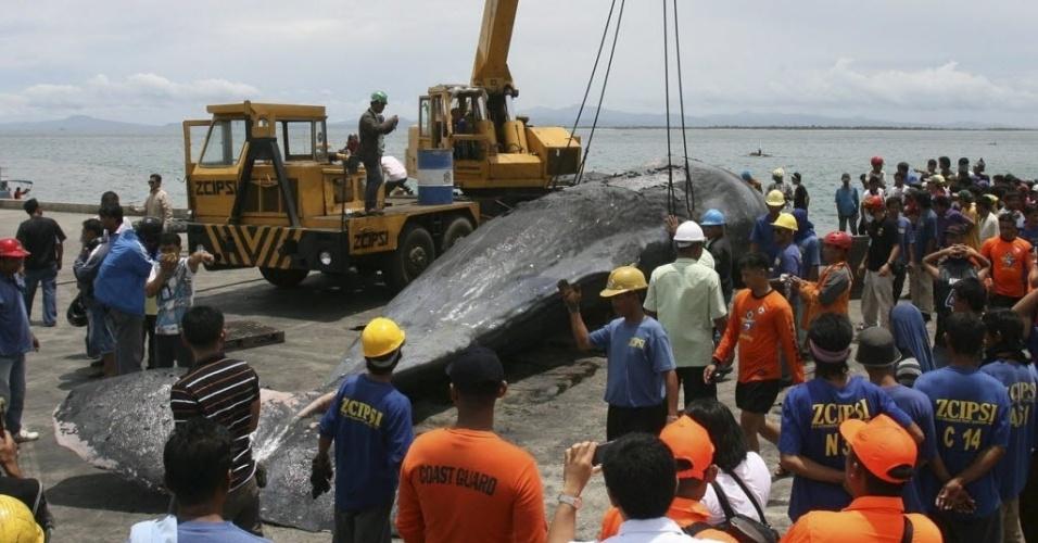 19.set.2012 - Grúa carrega corpo de baleia cachalote de 16 metros de comprimento nesta quarta-feira (19), em Zamboanga (Filipinas). O animal foi encontrado morto perto de uma ilha na costa de Zamboanga