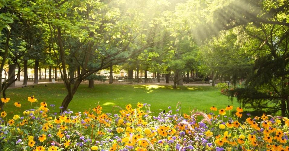 flores jardim primavera:representa um dia típico de primavera, período em que as flores