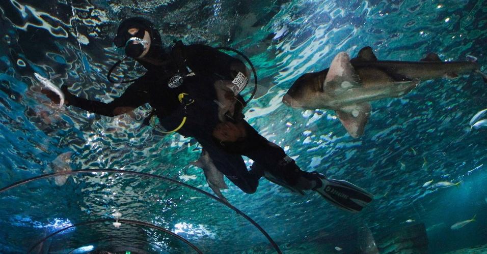 24.set.2012 - Mergulhador se prepara para alimentar arraias no aquário de Sydney (Austrália)