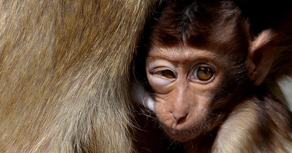 Macaco Zoiudo A Da Foto Mama Displicentemente Nos Sub Rbios De