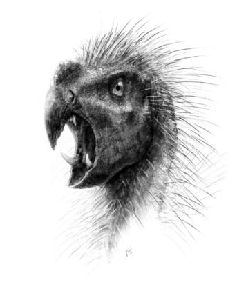 3.out.2012 - O desenho mostra o 'Pegomastax africanus', um recém-descoberto dinossauro anão com dois dentes afiados. Segundo estudo publicado no site da National Geographic, esse animail se alimentava apenas de plantas