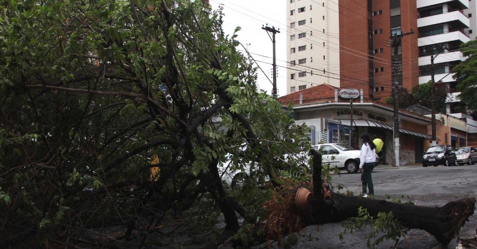 17.out.2012 - Árvore caída no cruzamento das ruas República do Iraque e João de Souza, na região central de São Paulo