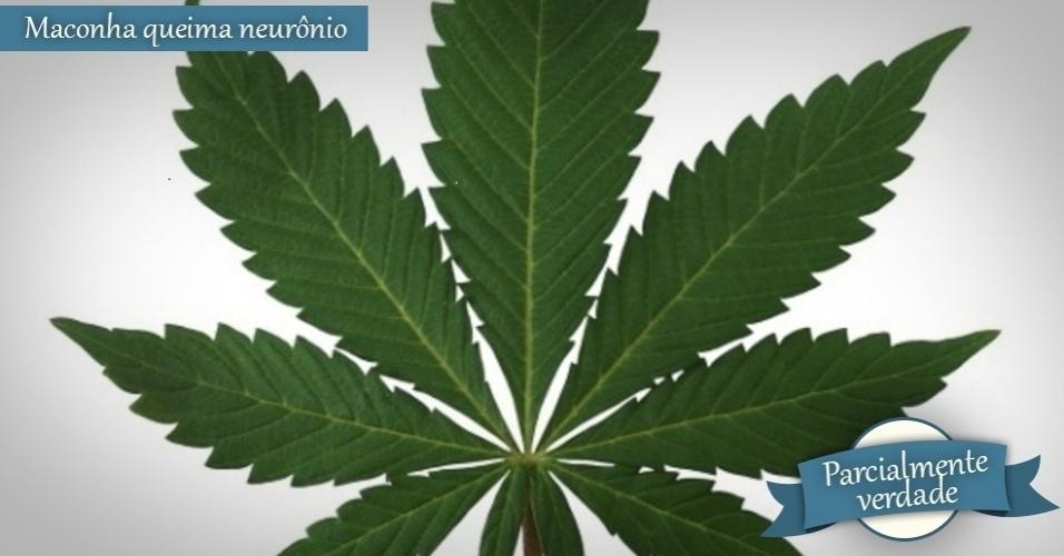 folha da cannabis, folha de maconha