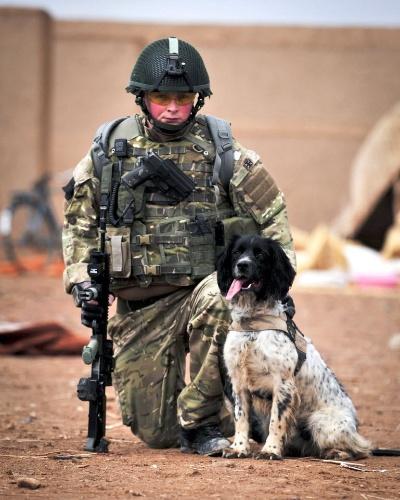 25.out.2012 - Em foto de arquivo, cão farejador de explosivos, que recebeu uma medalha postumamente como um herói de guerra depois de morrer no ano passado, atua com um soldado britânico em uma operação no Afeganistão